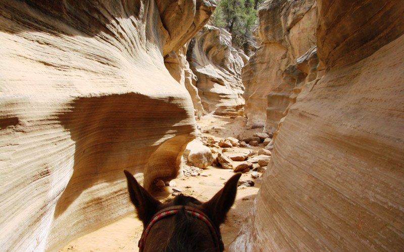 horseback riding in Bryce Canyon, book your tour now through Xplore!