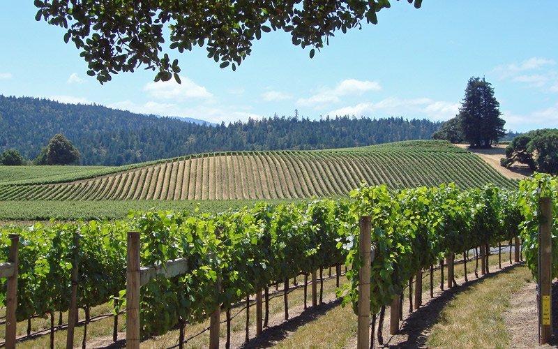 tra Napa e Sonoma non perderti una degustazione degli ottimi vini californiani