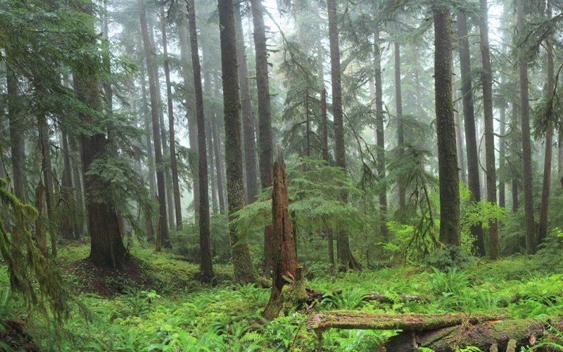 un parco meraviglioso, immerso nella splendida natura del selvaggio Nord Ovest americano
