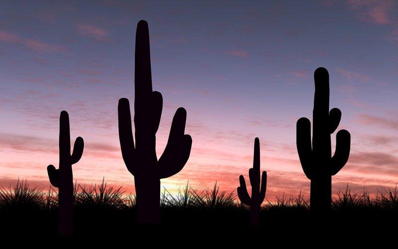 sei pronto a sentirti piccolissimo davanti ai cactus giganti del Saguaro National Park?