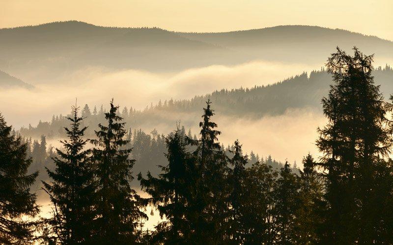 guidare tra le Smoky Mountains nel cuore del Tennessee