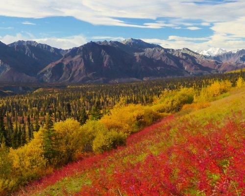guida turistica Alaska